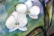 13-045 - Orchid - SOLD
