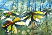 13-064 - Where the Daisies Grow - £68 - Watercolour on W/C Paper - White mounted 35x28cm