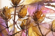 13-093 - Teasels - £75 - Acrylic on C/Board  Mounted in white frame  23x23cm