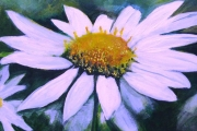 14-038 - Daisy - £203 - Acrylic on Board -  Mounted in white frame 46x46cm