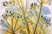 160-033 - Seed Heads - £37.50 - Drypoint on W/C Paper - Mounted 25x20cm