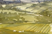 160-040 - Baa !!! - £67.50 - Watercolouron W/C Paper - Mounted35x28cm